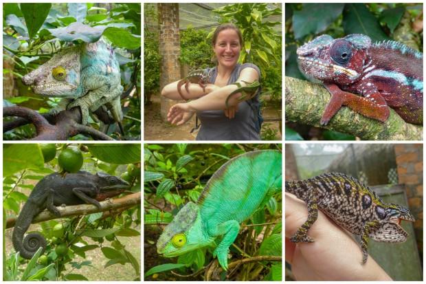 reptile reserve.jpg