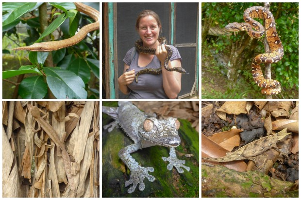 reptile reserve1.jpg